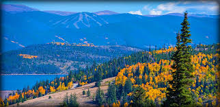 silverthorne towntomes